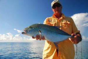 Bluefin_Kingfish__4_